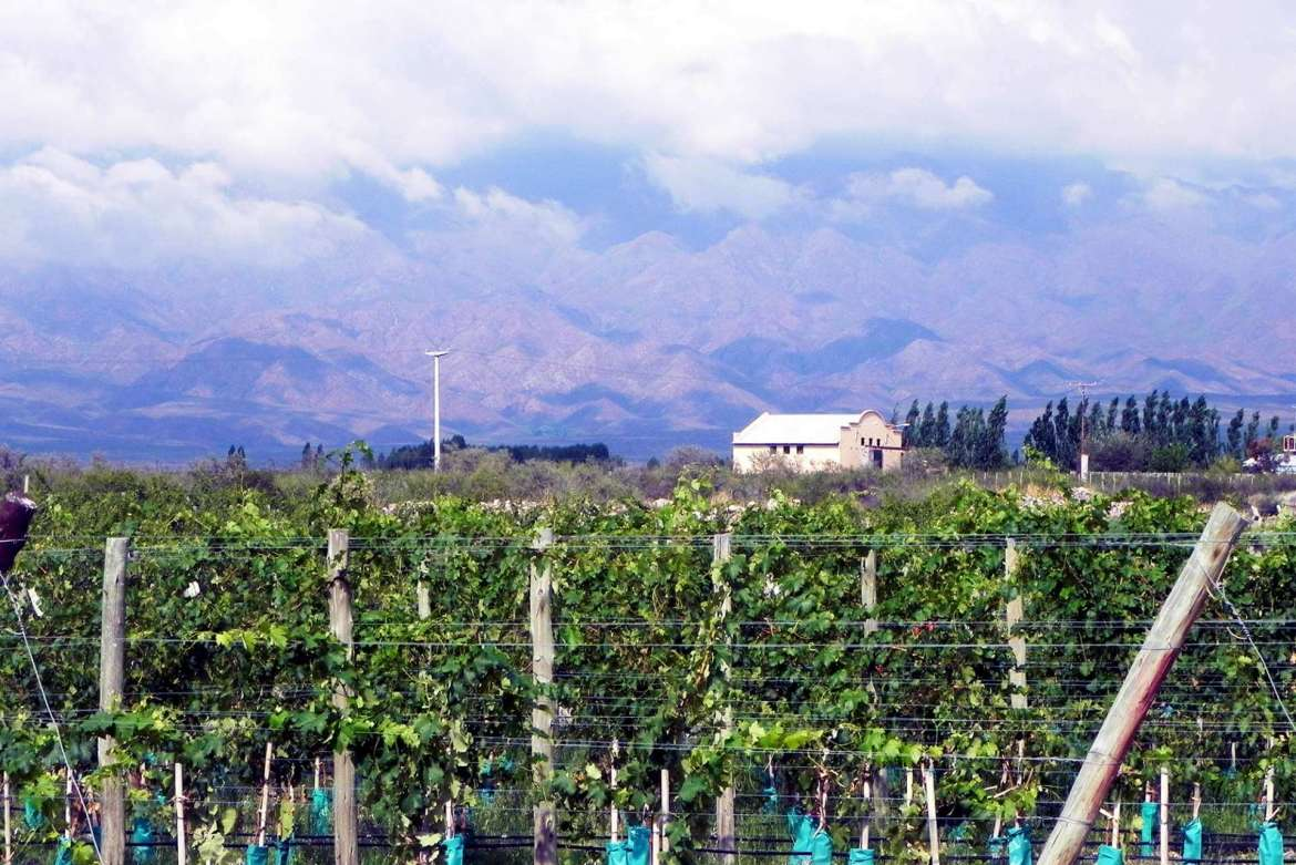 The vineyards of Bodega Gimenez Riili Winery located in the Uco Valley region of Mendoza with Aconcagua, were part of the Lifelong Learning program's tour of Mendoza, Argentina, this past February. The highest mountain in the Western Hemisphere, in the background.