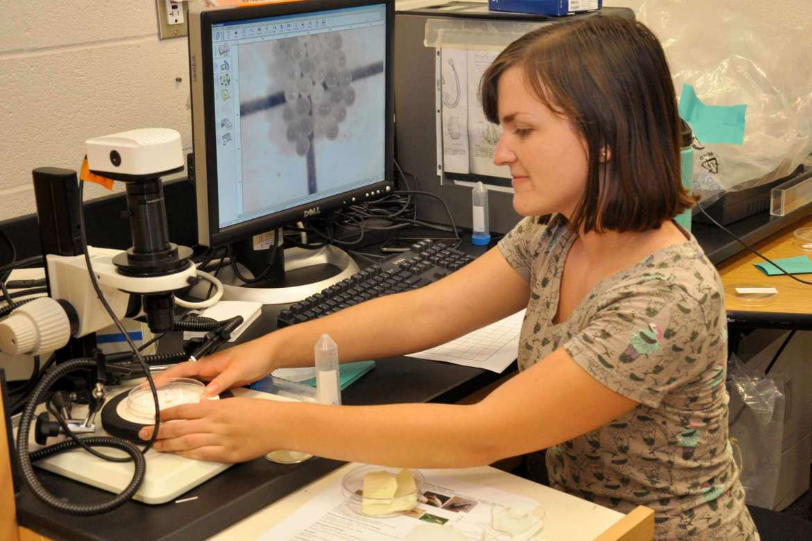 Student McKenzie Allen, Kearneysville, examines stink bug eggs using Shephred's EntoVision lab imaging system.