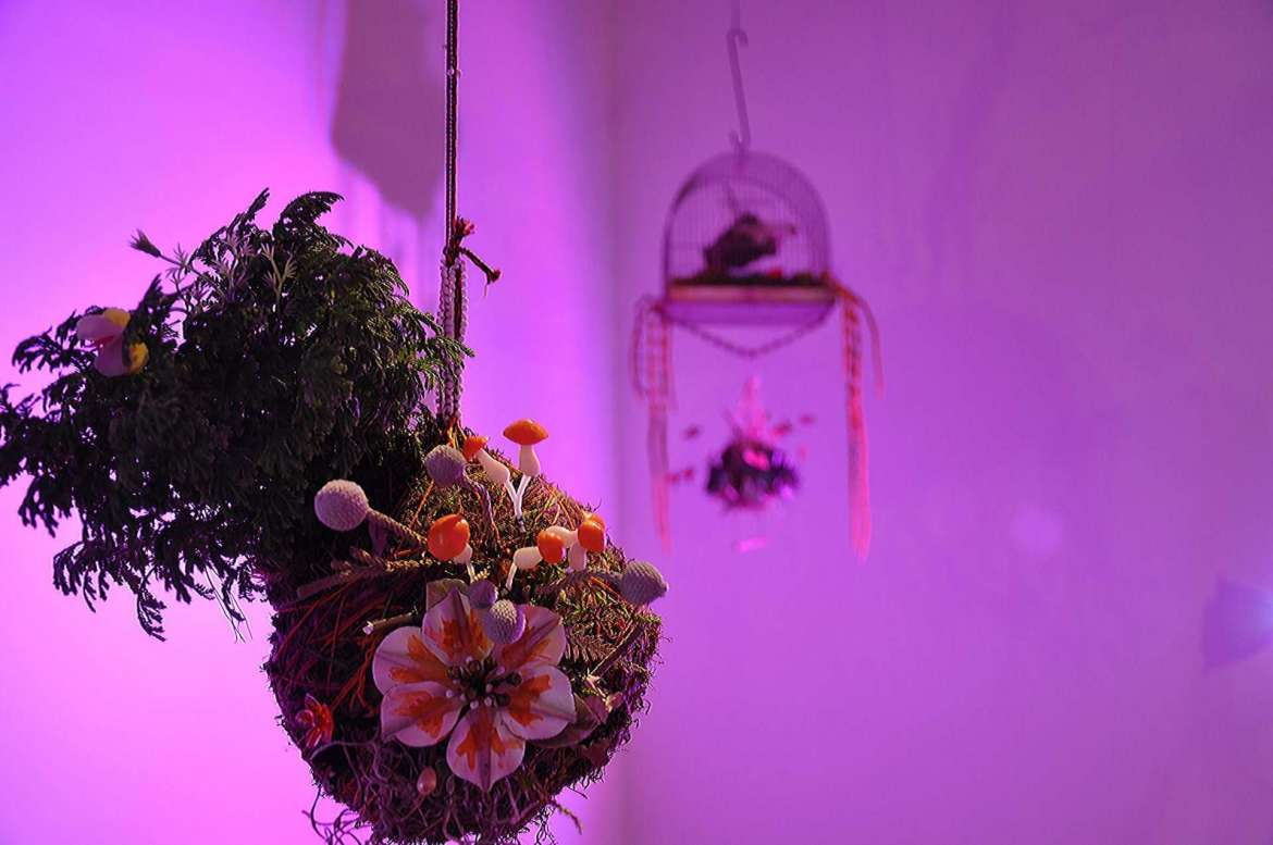 "Evanisko created a Japanese kokedama exhibit  ""Like Moss Between the Cracks"" in the Center for Contemporary Arts II, Phaze 2 Gallery, January 2016."
