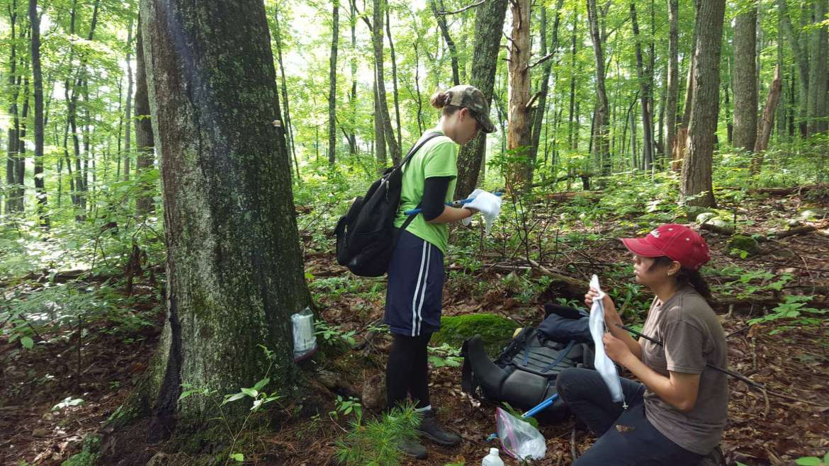 Pictured in the Shenandoah National Park in Virginia during a summer 2016 tree core collection trip are Sierra Hoffman and Amaris Jalil.