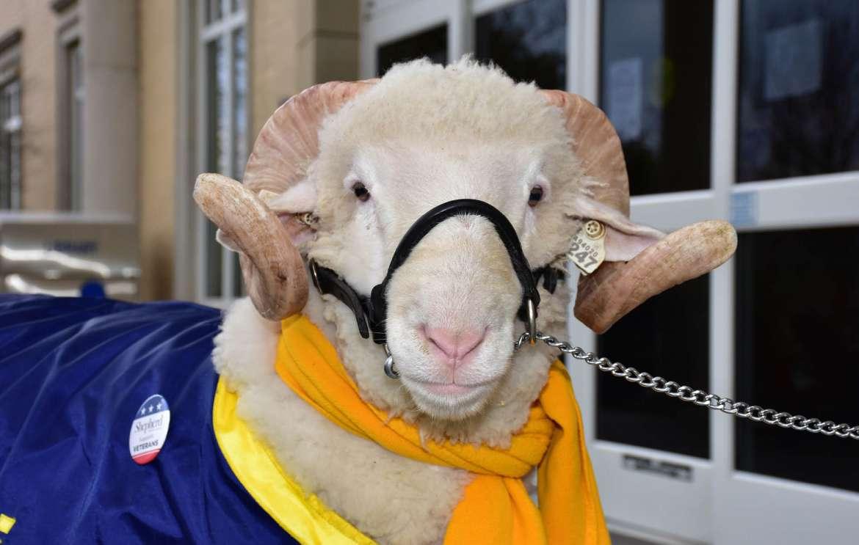 Shepherd's mascot J.C.