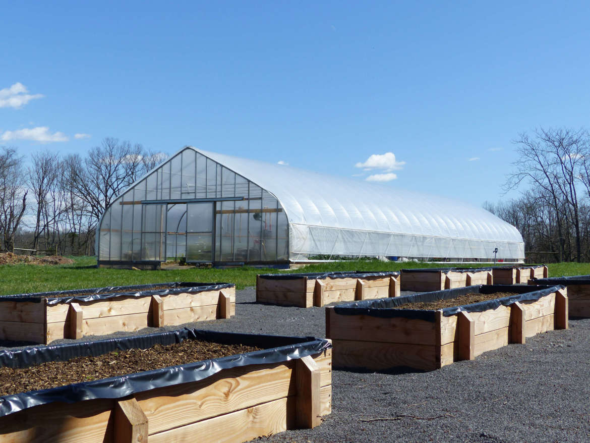 Organic certification at Shepherd's Agricultural Innovation Center at Tabler Farm covers eight acres where vegetables are produced, including the greenhouse and the field surrounding it.